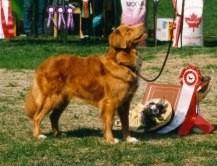 Ronja BIS Tollarpecialen 1994