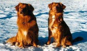 Rocky och Ronja