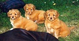Från vänster Inka, Nicki och Okra