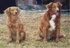 Bella och Apollon