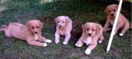 Från vänster Sack, Penny, Tudor och Quiz.